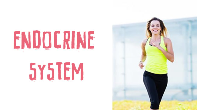 Exercise and the endocrine system
