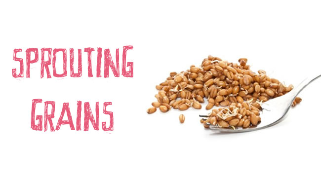Why sprouted grains are worth a try